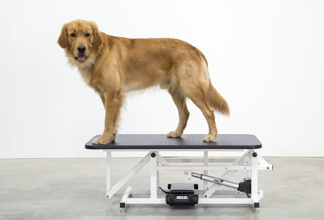 adjustable-height-grooming-tabel-2